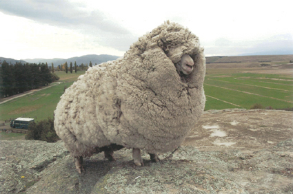 Wooly.